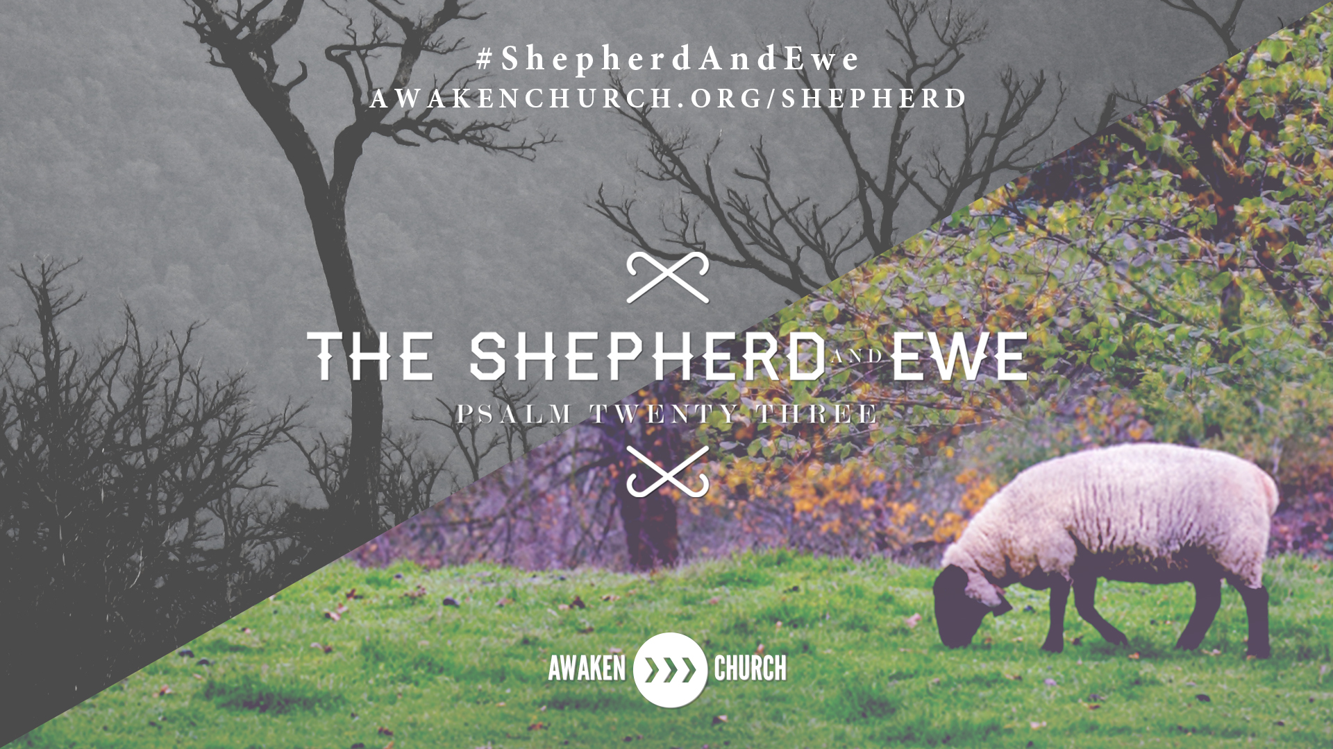 The Shepherd and Ewe